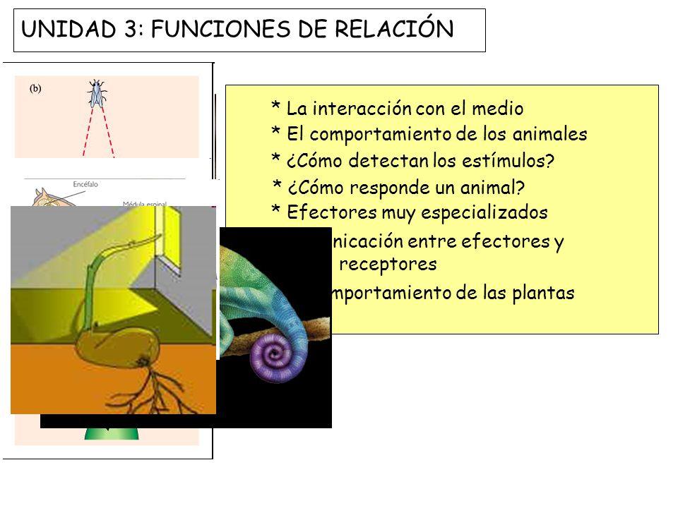 UNIDAD 3: FUNCIONES DE RELACIÓN * La interacción con el medio * El comportamiento de los animales * ¿Cómo detectan los estímulos? * ¿Cómo responde un