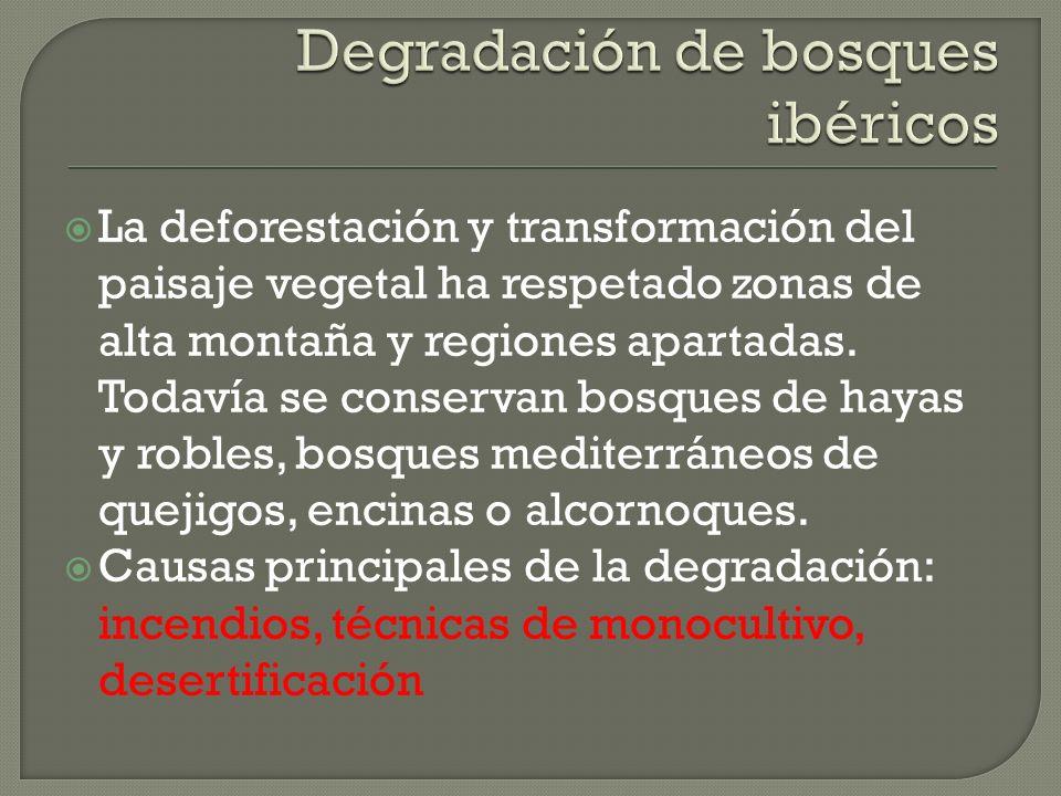 La deforestación y transformación del paisaje vegetal ha respetado zonas de alta montaña y regiones apartadas. Todavía se conservan bosques de hayas y