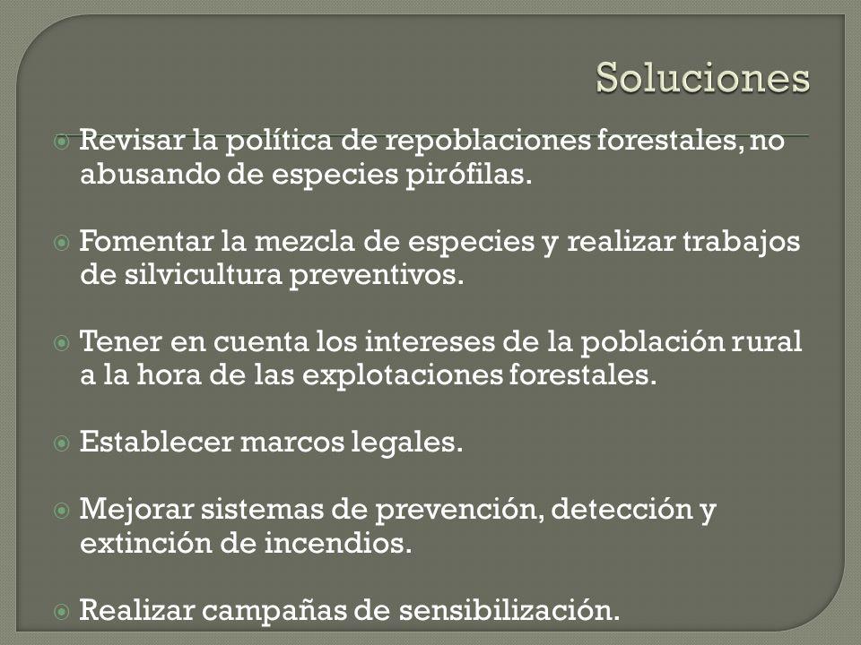 Revisar la política de repoblaciones forestales, no abusando de especies pirófilas. Fomentar la mezcla de especies y realizar trabajos de silvicultura