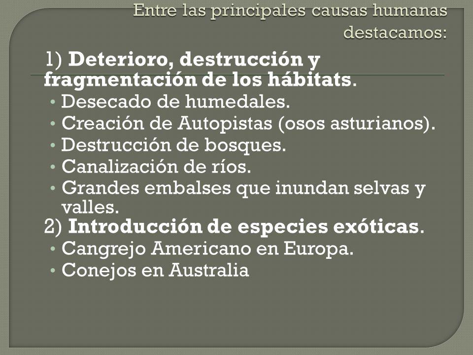 1) Deterioro, destrucción y fragmentación de los hábitats. Desecado de humedales. Creación de Autopistas (osos asturianos). Destrucción de bosques. Ca