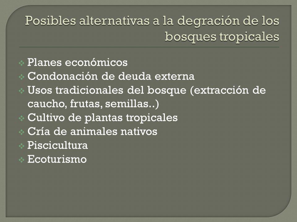 Planes económicos Condonación de deuda externa Usos tradicionales del bosque (extracción de caucho, frutas, semillas..) Cultivo de plantas tropicales