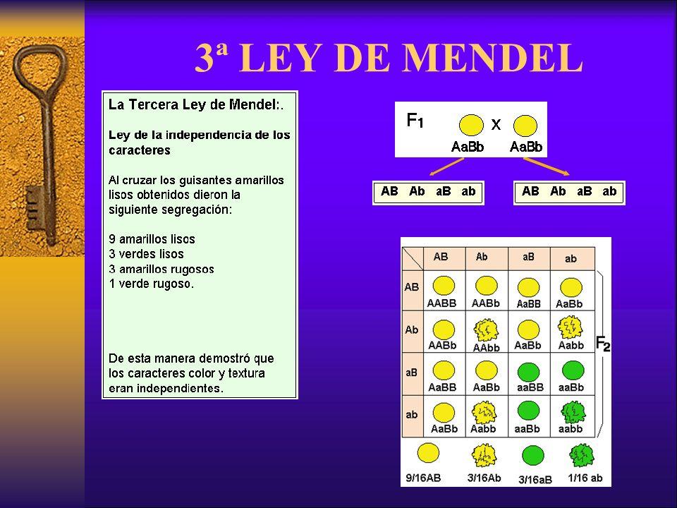 3ª LEY DE MENDEL