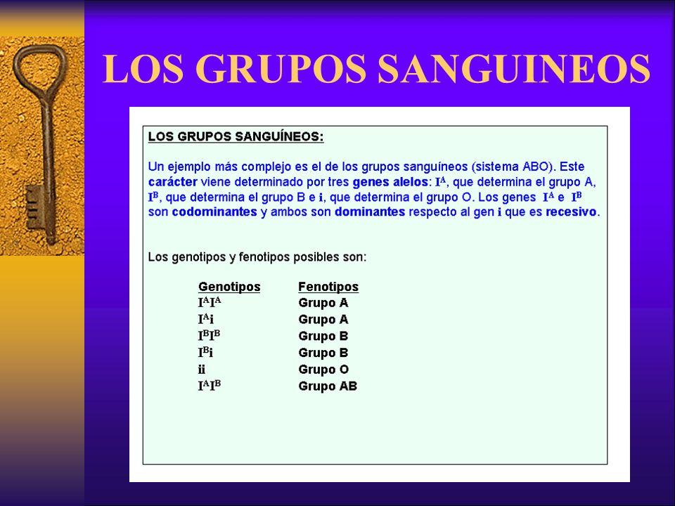LOS GRUPOS SANGUINEOS