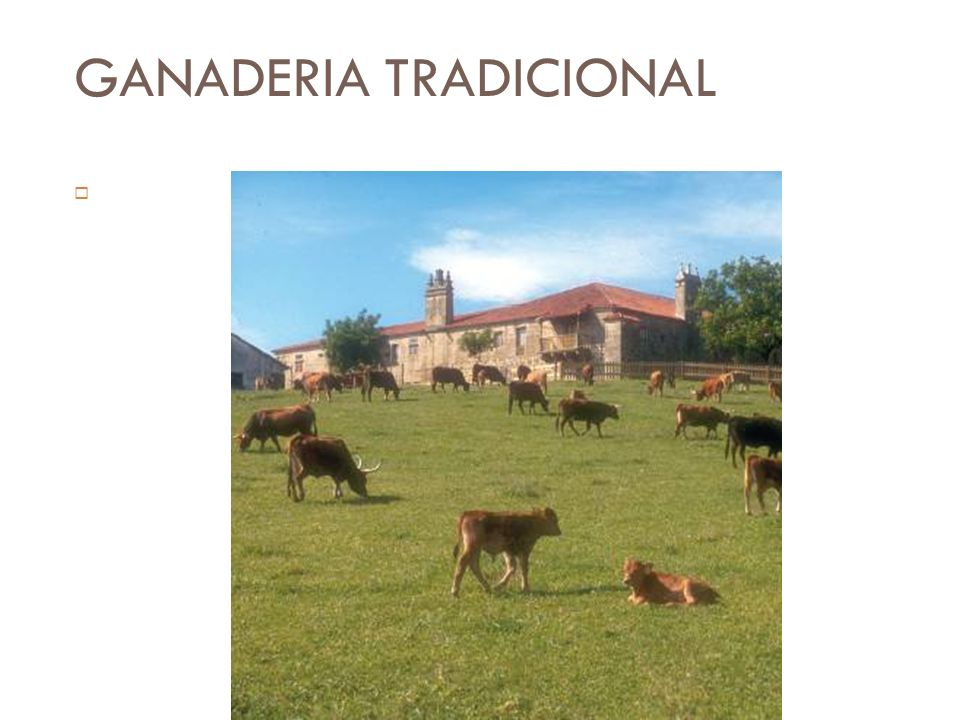 GANADERIA TRADICIONAL Producen carne y productos animales suficientes para alimentar a sus familias, además de tracción para los trabajos agrícolas y