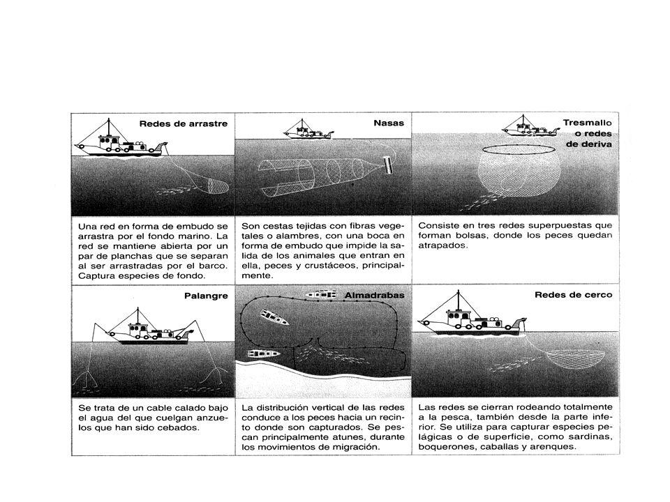 Medidas para proteger la productividad de los océanos. Explotación mas racional. Ley del mar (1982): se permite pesca hasta los 372 Km. Pesca de altur