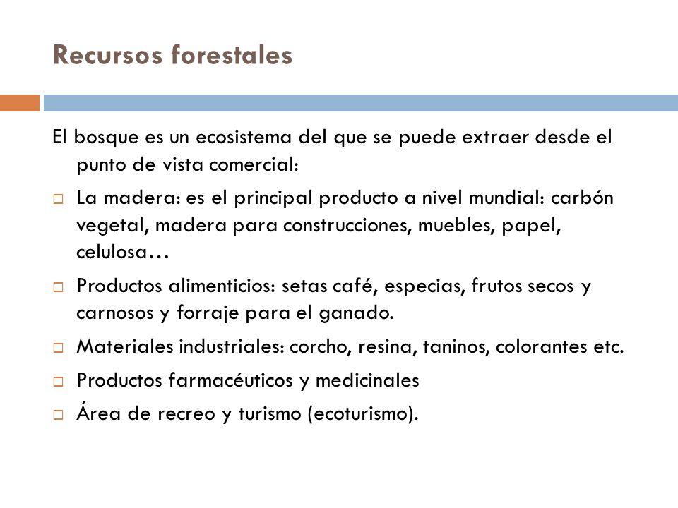 Otras fuentes de alimentos Hongos Hojas de los vegetales no aprovechables anteriormente Algas Animales salvajes Acuicultura El krill Nuevos alimentos
