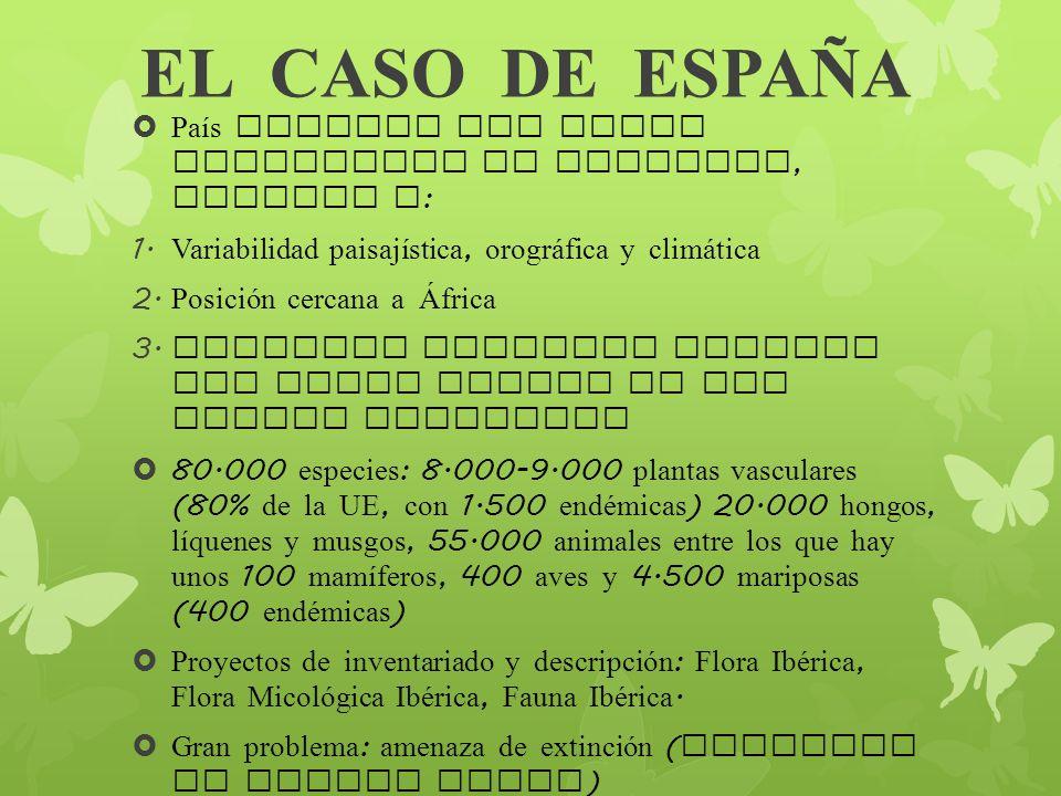 EL CASO DE ESPA Ñ A País europeo con mayor diversidad de especies, gracias a : 1. Variabilidad paisajística, orogr á fica y clim á tica 2. Posición ce