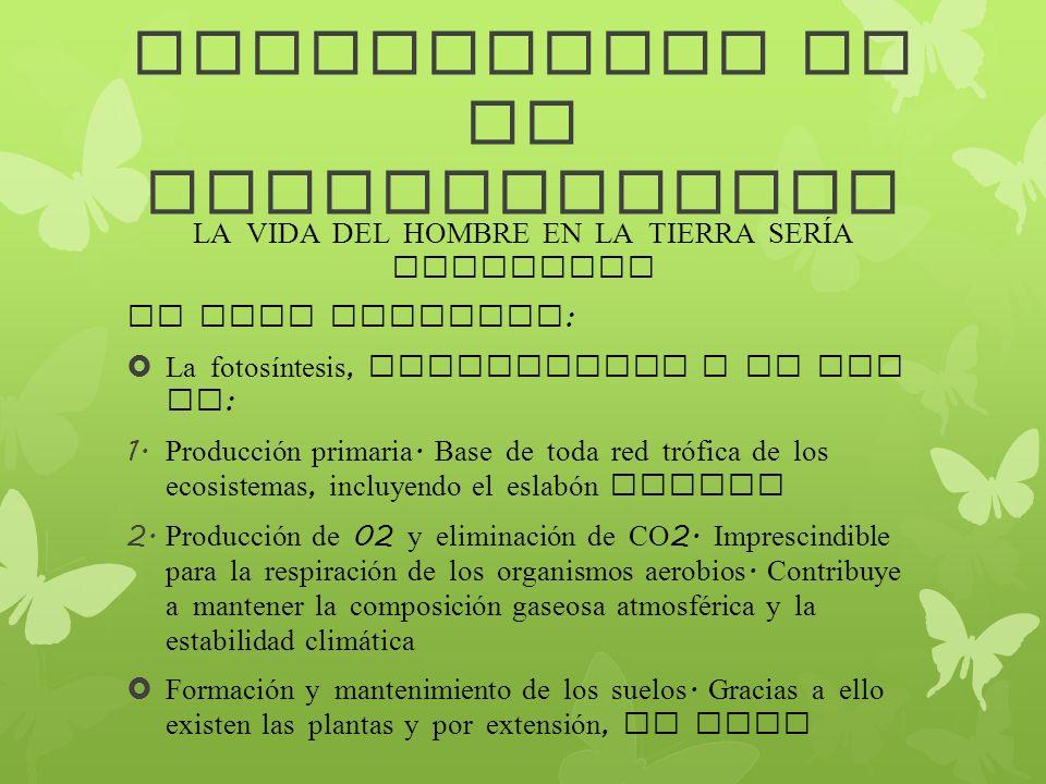 IMPORTANCIA DE LA BIODIVERSIDAD LA VIDA DEL HOMBRE EN LA TIERRA SERÍA IMPOSIBLE DE ELLA DEPENDEN : La fotosíntesis, responsable a su vez de : 1. Produ