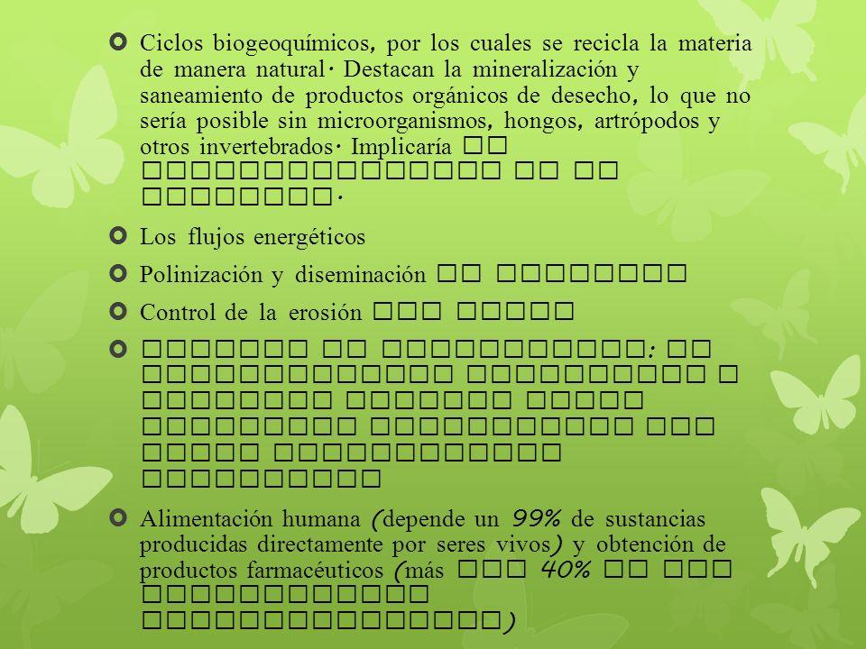 Ciclos biogeoquímicos, por los cuales se recicla la materia de manera natural. Destacan la mineralización y saneamiento de productos org á nicos de de