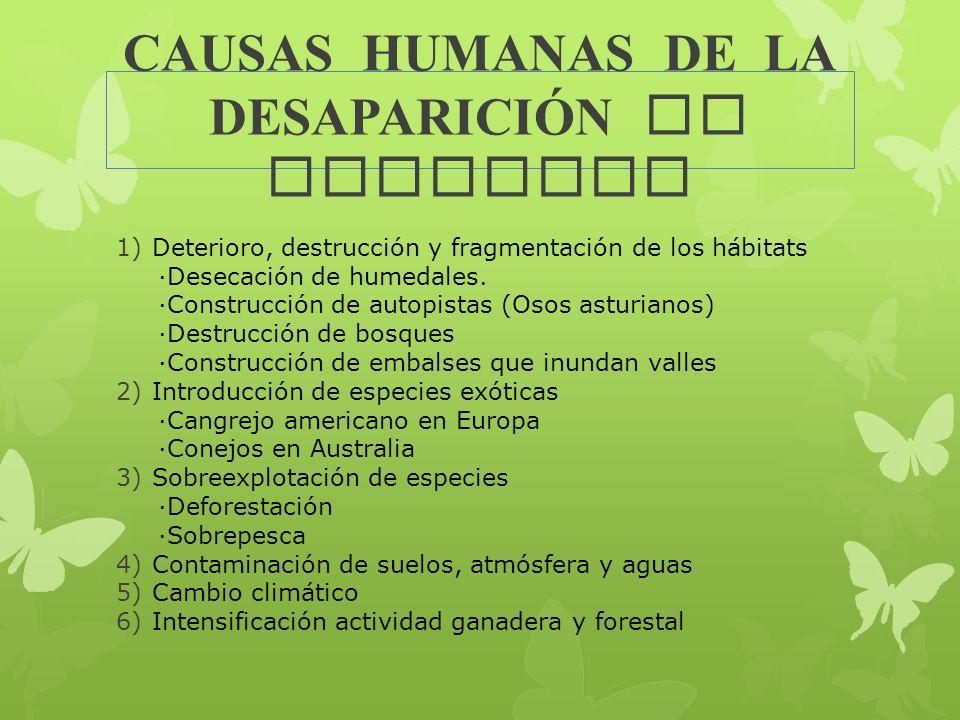 CAUSAS HUMANAS DE LA DESAPARICI Ó N DE ESPECIES 1)Deterioro, destrucción y fragmentación de los hábitats ·Desecación de humedales. ·Construcción de au