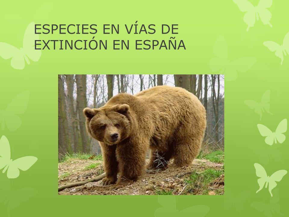 ESPECIES EN VÍAS DE EXTINCIÓN EN ESPAÑA