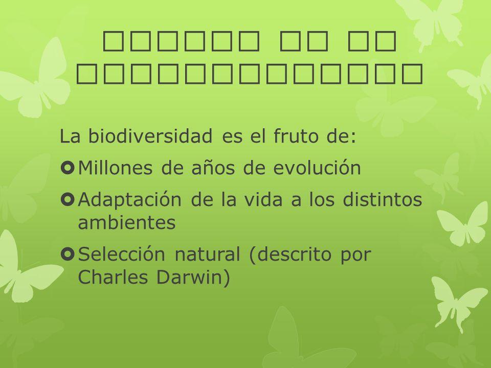 ORIGEN DE LA BIODIVERSIDAD La biodiversidad es el fruto de: Millones de años de evolución Adaptación de la vida a los distintos ambientes Selección na