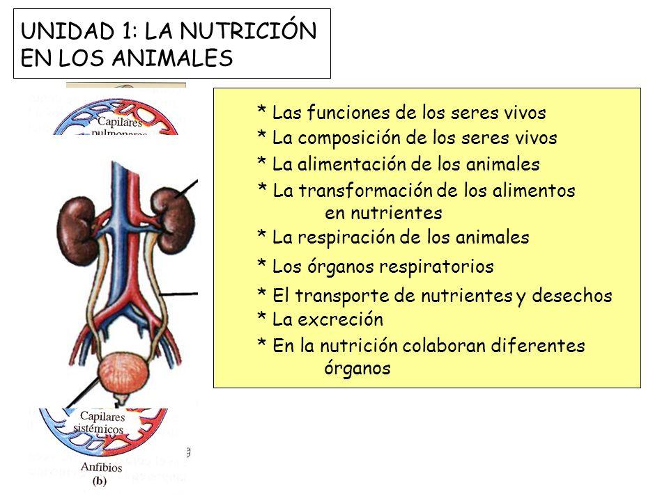 UNIDAD 1: LA NUTRICIÓN EN LOS ANIMALES * Las funciones de los seres vivos * La composición de los seres vivos * La alimentación de los animales * La t