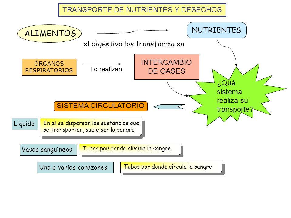 TRANSPORTE DE NUTRIENTES Y DESECHOS ALIMENTOS NUTRIENTES el digestivo los transforma en INTERCAMBIO DE GASES ÓRGANOS RESPIRATORIOS Lo realizan ¿Qué si