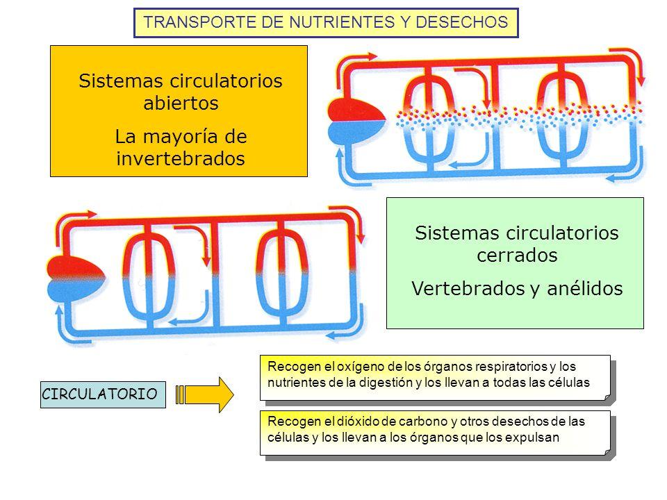 Sistemas circulatorios abiertos La mayoría de invertebrados Sistemas circulatorios cerrados Vertebrados y anélidos TRANSPORTE DE NUTRIENTES Y DESECHOS