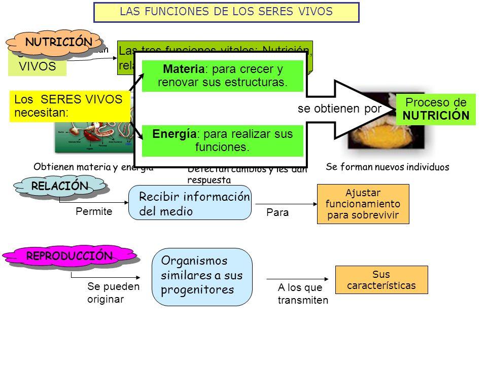 LAS FUNCIONES DE LOS SERES VIVOS SERES VIVOS Las tres funciones vitales: Nutrición, relación y reproducción Realizan Obtienen materia y energía Detect