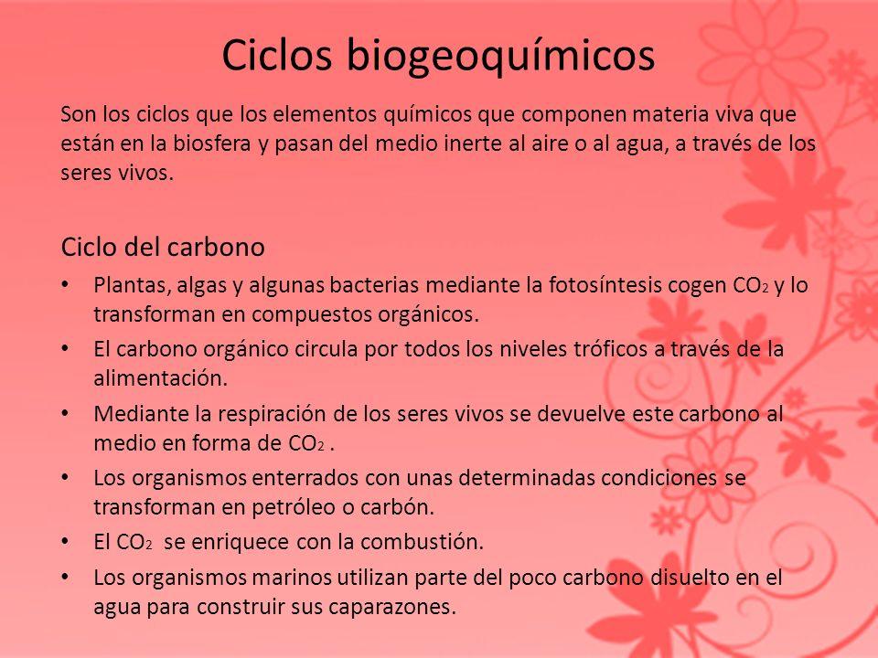 Ciclos biogeoquímicos Son los ciclos que los elementos químicos que componen materia viva que están en la biosfera y pasan del medio inerte al aire o
