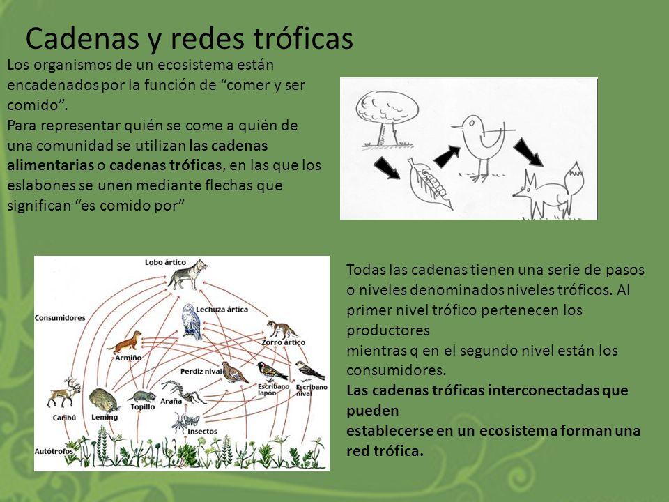 Cadenas y redes tróficas Los organismos de un ecosistema están encadenados por la función de comer y ser comido. Para representar quién se come a quié