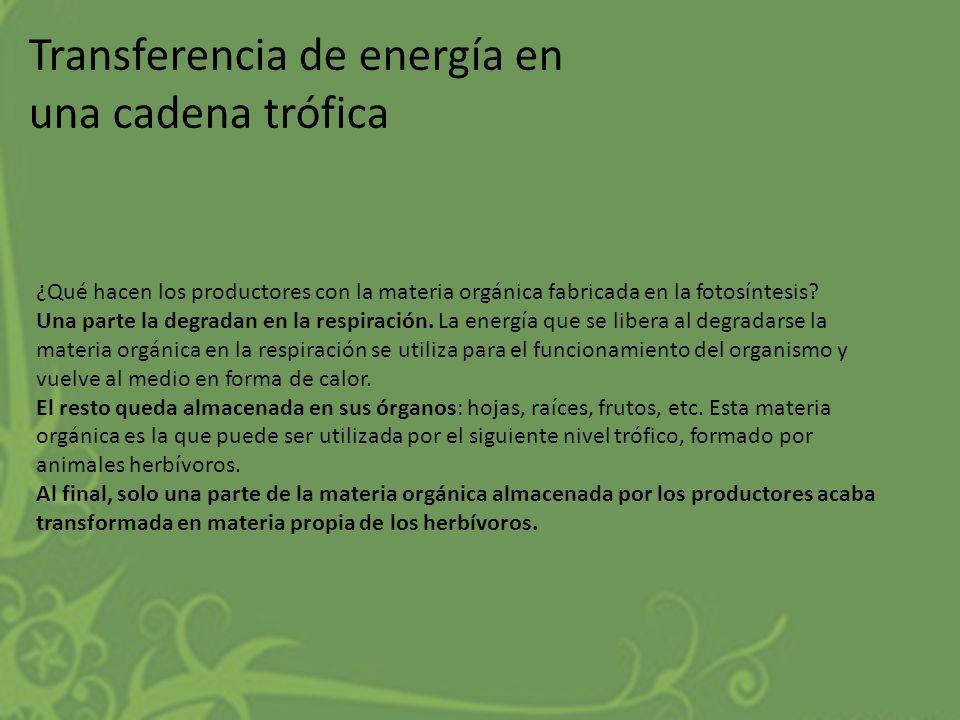 Transferencia de energía en una cadena trófica ¿Qué hacen los productores con la materia orgánica fabricada en la fotosíntesis? Una parte la degradan