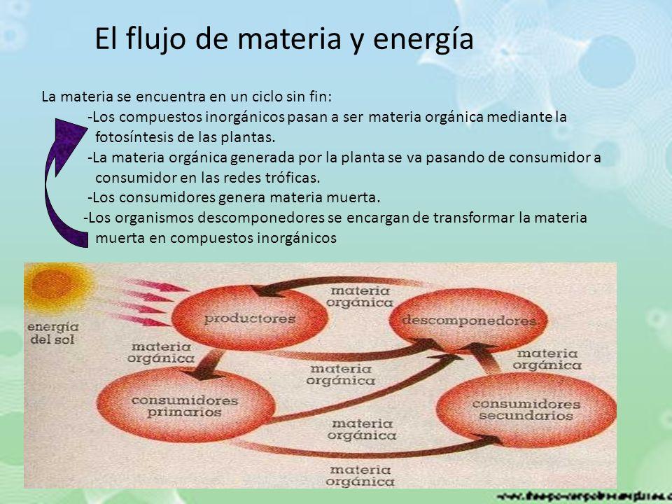 El flujo de materia y energía La materia se encuentra en un ciclo sin fin: -Los compuestos inorgánicos pasan a ser materia orgánica mediante la fotosí