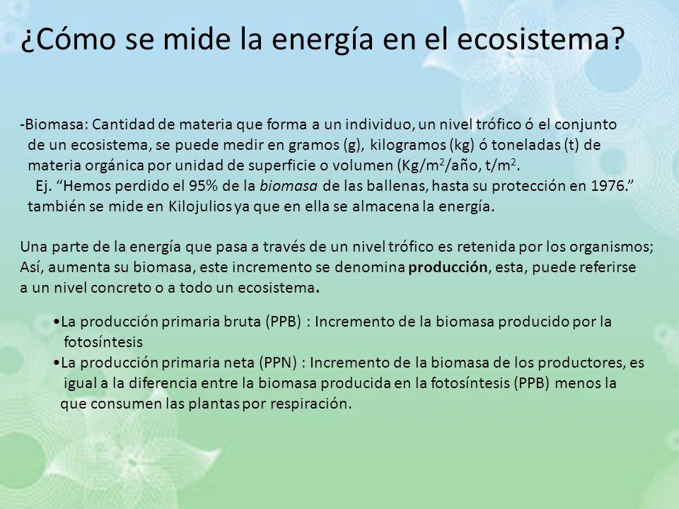 ¿Cómo se mide la energía en el ecosistema? -Biomasa: Cantidad de materia que forma a un individuo, un nivel trófico ó el conjunto de un ecosistema, se