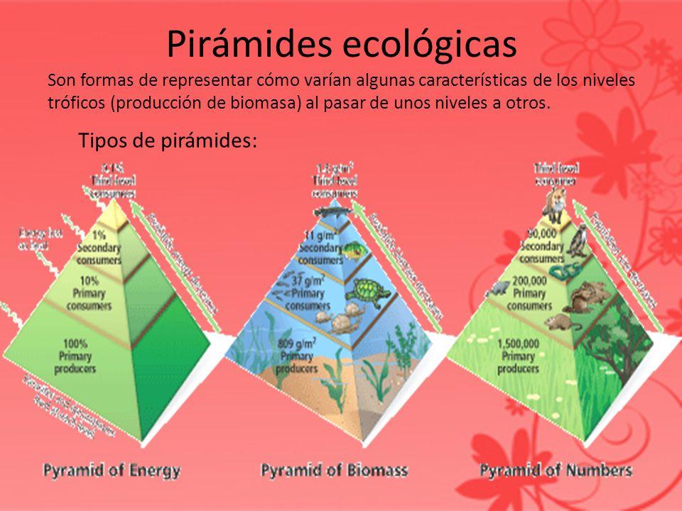 Pirámides ecológicas Son formas de representar cómo varían algunas características de los niveles tróficos (producción de biomasa) al pasar de unos ni