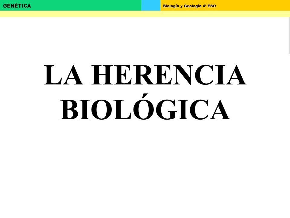 Biología y Geología 4º ESO GENÉTICA LA HERENCIA BIOLÓGICA