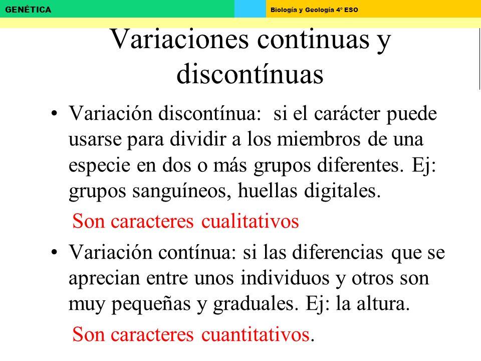 Biología y Geología 4º ESO GENÉTICA Variaciones continuas y discontínuas Variación discontínua: si el carácter puede usarse para dividir a los miembros de una especie en dos o más grupos diferentes.