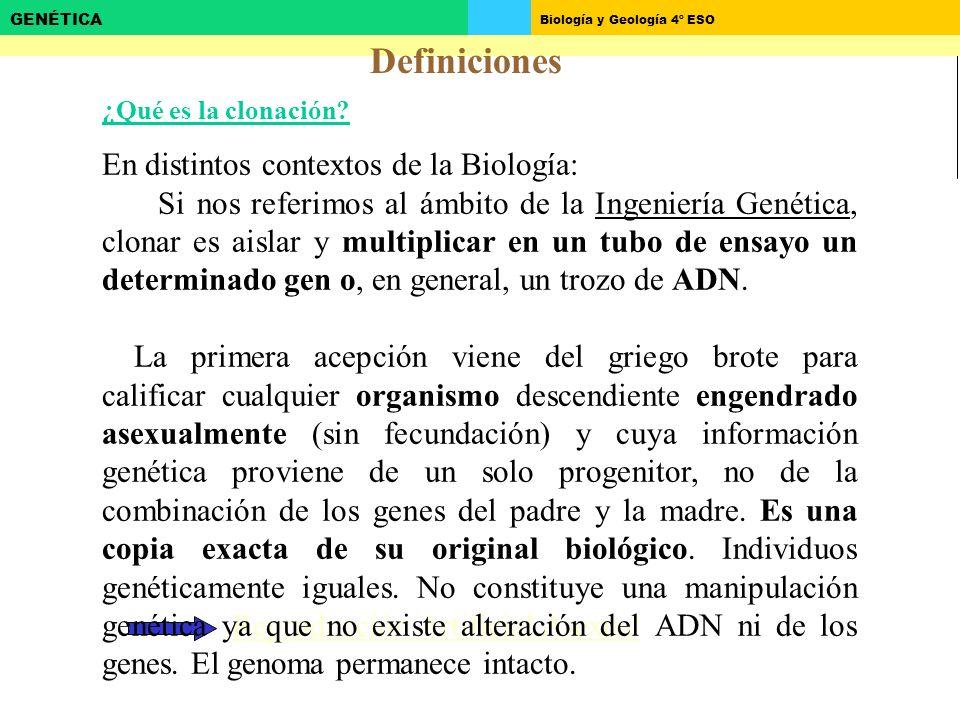 Biología y Geología 4º ESO GENÉTICA Definiciones Reproducción Artificial Asexual ¿Qué es la clonación.