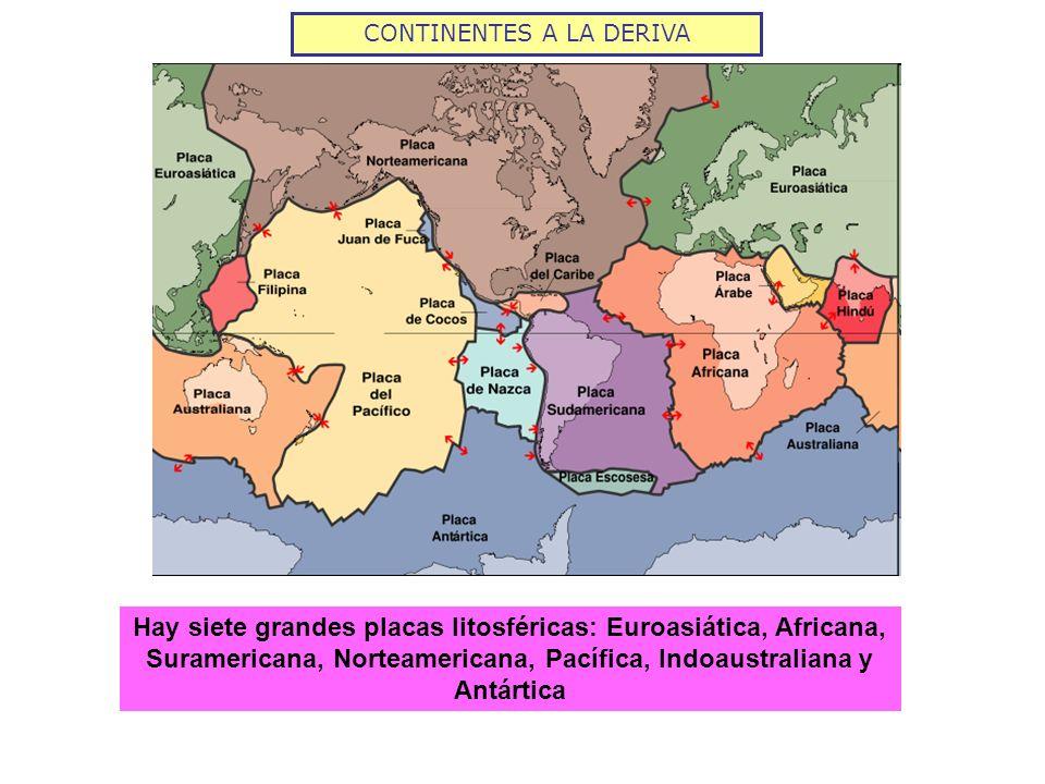 CONTINENTES A LA DERIVA Hay siete grandes placas litosféricas: Euroasiática, Africana, Suramericana, Norteamericana, Pacífica, Indoaustraliana y Antár