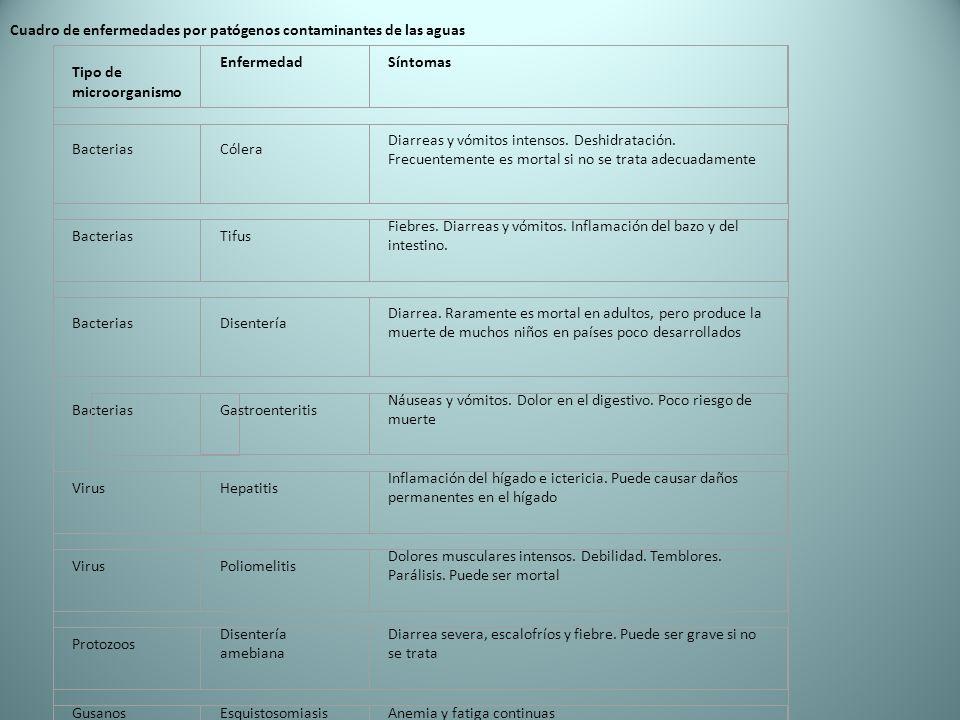Cuadro de enfermedades por patógenos contaminantes de las aguas Tipo de microorganismo EnfermedadSíntomas BacteriasCólera Diarreas y vómitos intensos.