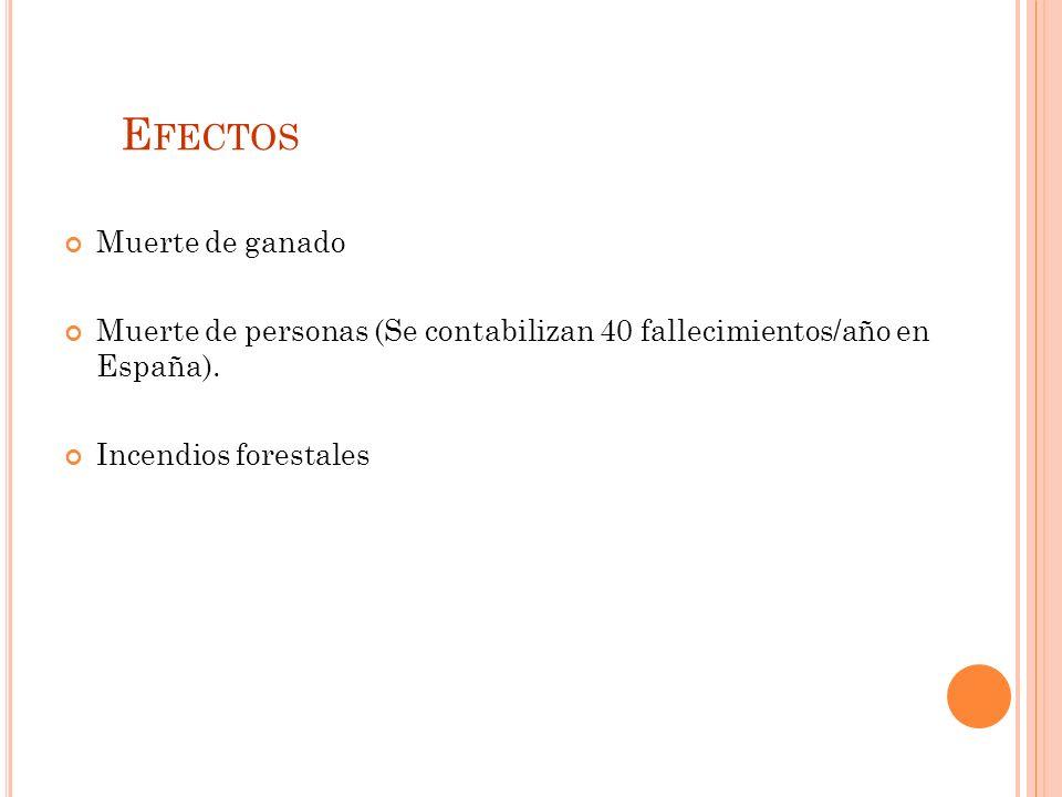 E FECTOS Muerte de ganado Muerte de personas (Se contabilizan 40 fallecimientos/año en España).