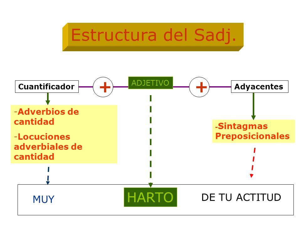 ADJETIVO Adyacentes -Adverbios de cantidad -Locuciones adverbiales de cantidad - Sintagmas Preposicionales Estructura del Sadj. Cuantificador ++ HARTO