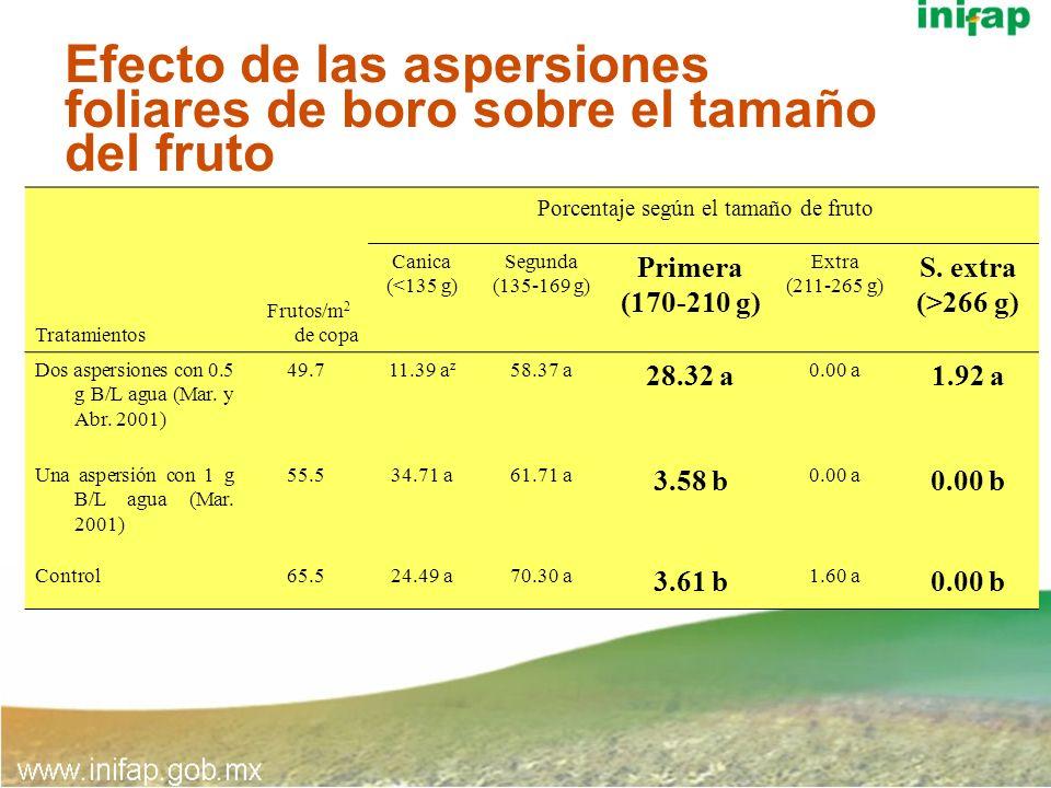 Efecto de las aspersiones foliares de boro sobre el tamaño del fruto Tratamientos Frutos/m 2 de copa Porcentaje según el tamaño de fruto Canica (<135