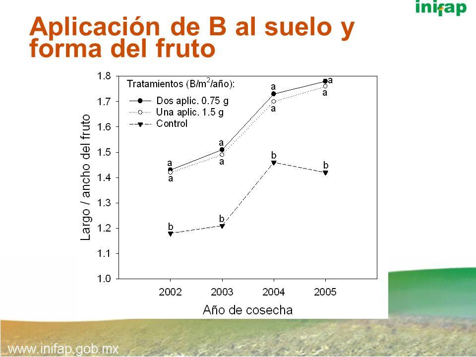 Aplicación de B al suelo y forma del fruto