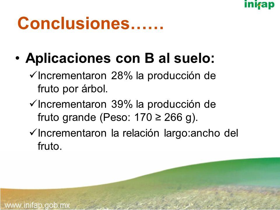 Conclusiones…… Aplicaciones con B al suelo: Incrementaron 28% la producción de fruto por árbol. Incrementaron 39% la producción de fruto grande (Peso: