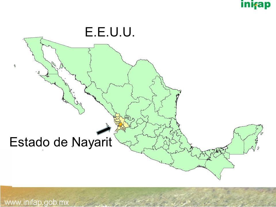 Zonas productoras de Hass en Nayarit, México - Clima semicálido subhúmedo - Temperatura media anual de 21 ºC - Precipitación media annual de 1,225 mm -Alturas de 800 a 1500 msnm Xalisco Tepic