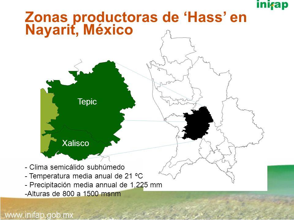 Zonas productoras de Hass en Nayarit, México - Clima semicálido subhúmedo - Temperatura media anual de 21 ºC - Precipitación media annual de 1,225 mm