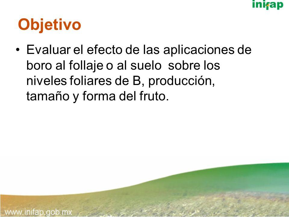 Conclusiones Aspersiones con B al follaje: 1 g B/L agua/árbol corrigió la deficiencia foliar de B, pero no incrementó la producción de fruto.