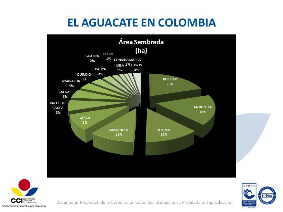 Documento Propiedad de la Corporación Colombia Internacional. Prohibida su reproducción. EL AGUACATE EN COLOMBIA