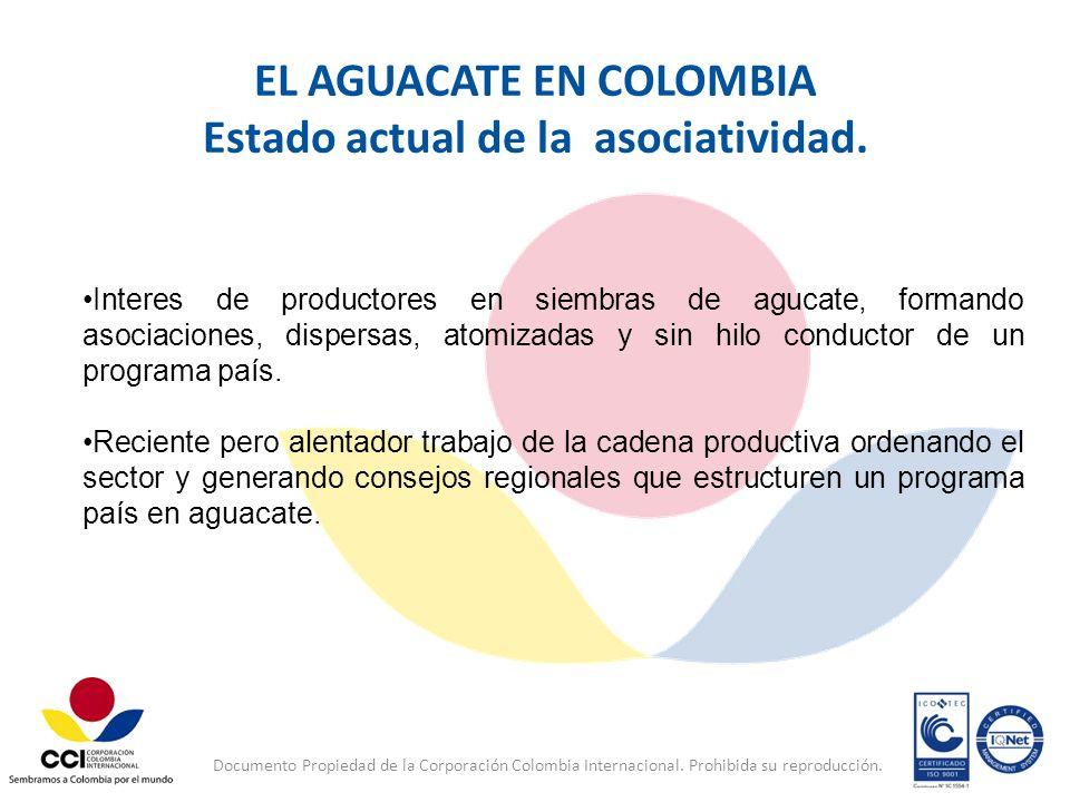 Documento Propiedad de la Corporación Colombia Internacional. Prohibida su reproducción. EL AGUACATE EN COLOMBIA Estado actual de la asociatividad. In
