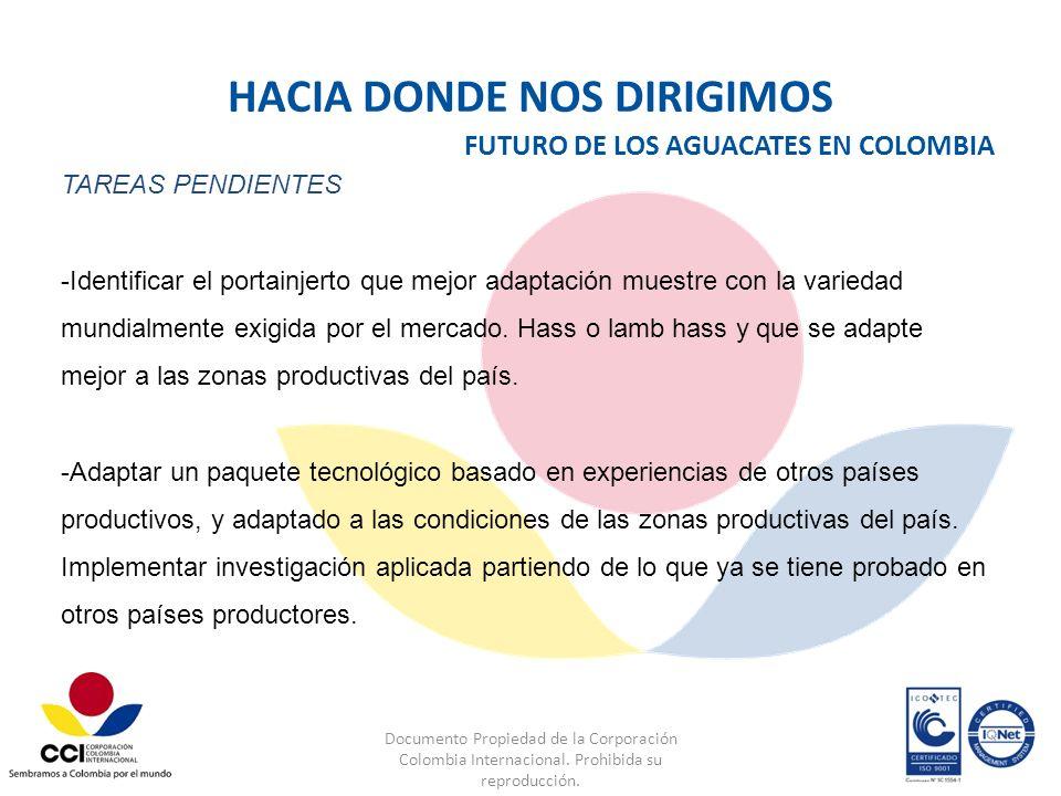 Documento Propiedad de la Corporación Colombia Internacional. Prohibida su reproducción. FUTURO DE LOS AGUACATES EN COLOMBIA TAREAS PENDIENTES -Identi