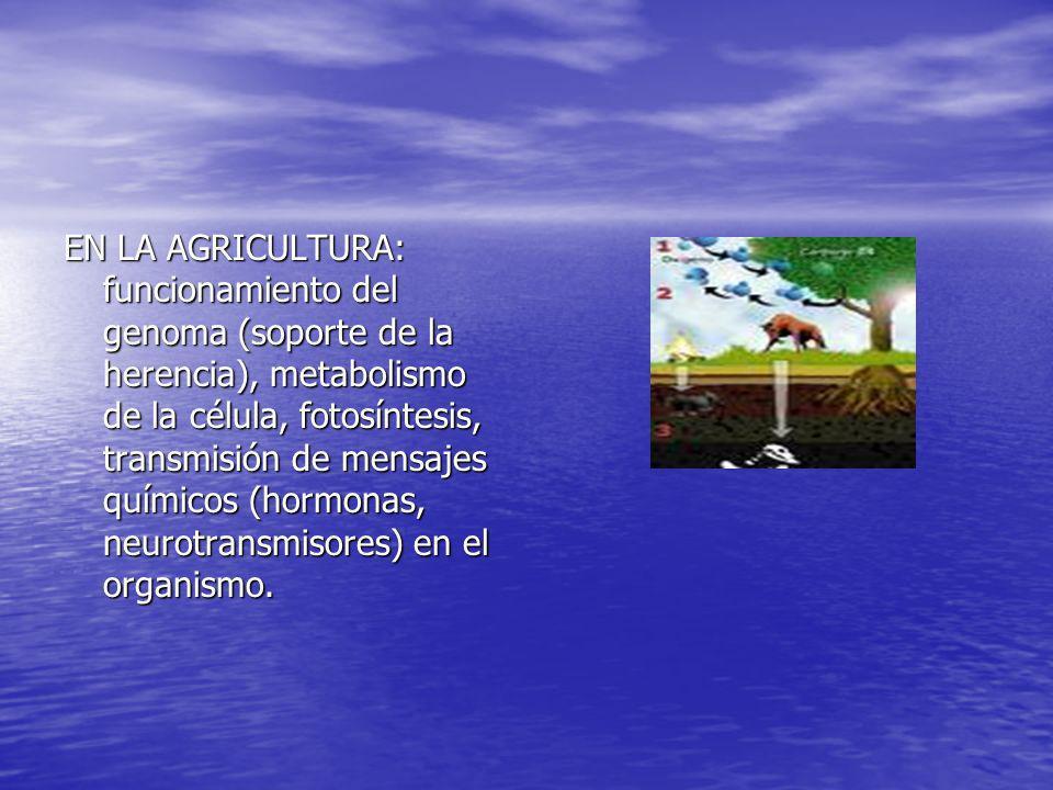 EN LA AGRICULTURA: funcionamiento del genoma (soporte de la herencia), metabolismo de la célula, fotosíntesis, transmisión de mensajes químicos (hormo