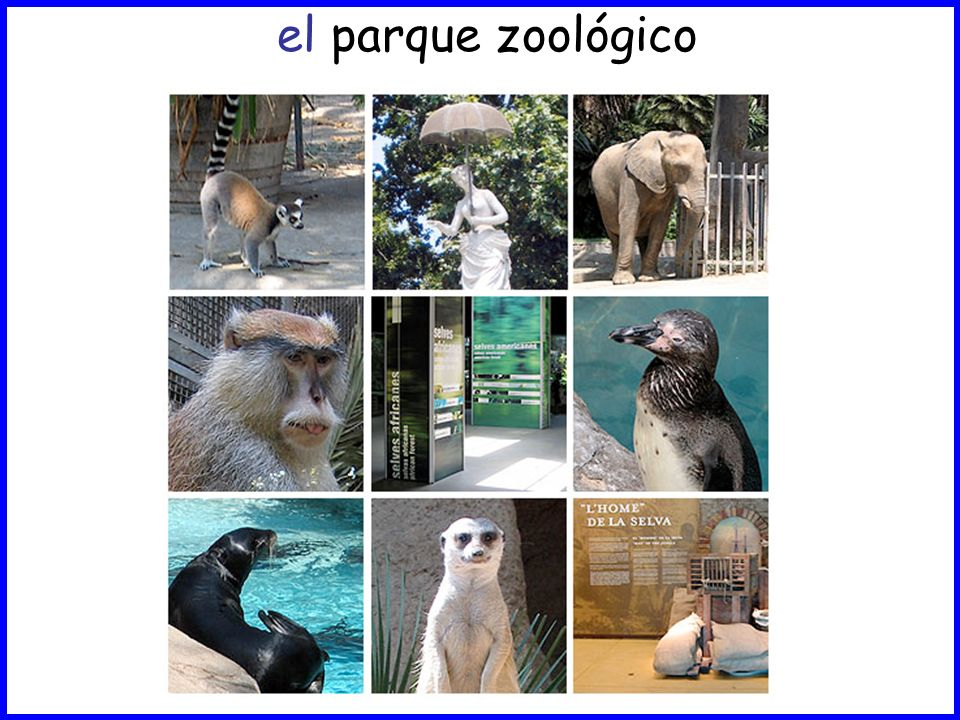 el parque zoológico
