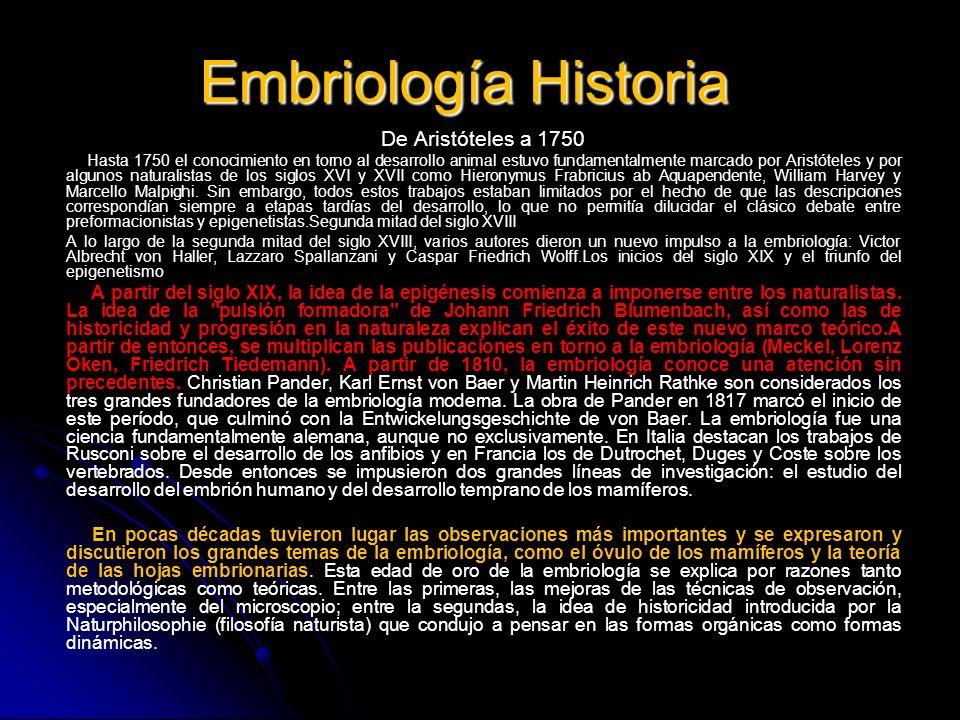 Embriología Historia De Aristóteles a 1750 Hasta 1750 el conocimiento en torno al desarrollo animal estuvo fundamentalmente marcado por Aristóteles y