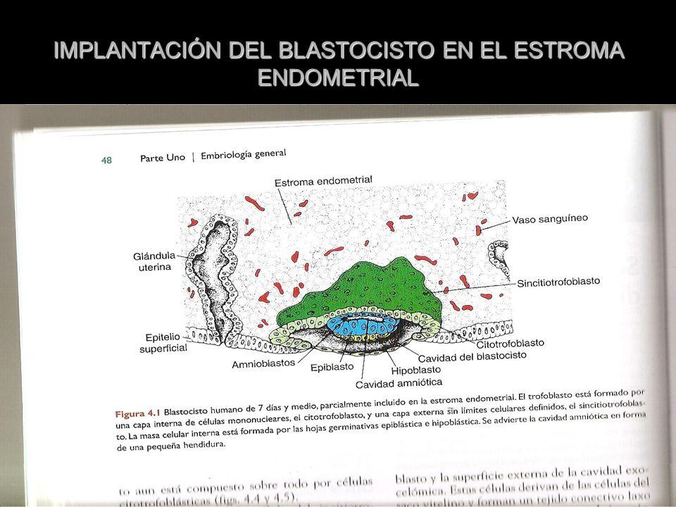 IMPLANTACIÓN DEL BLASTOCISTO EN EL ESTROMA ENDOMETRIAL