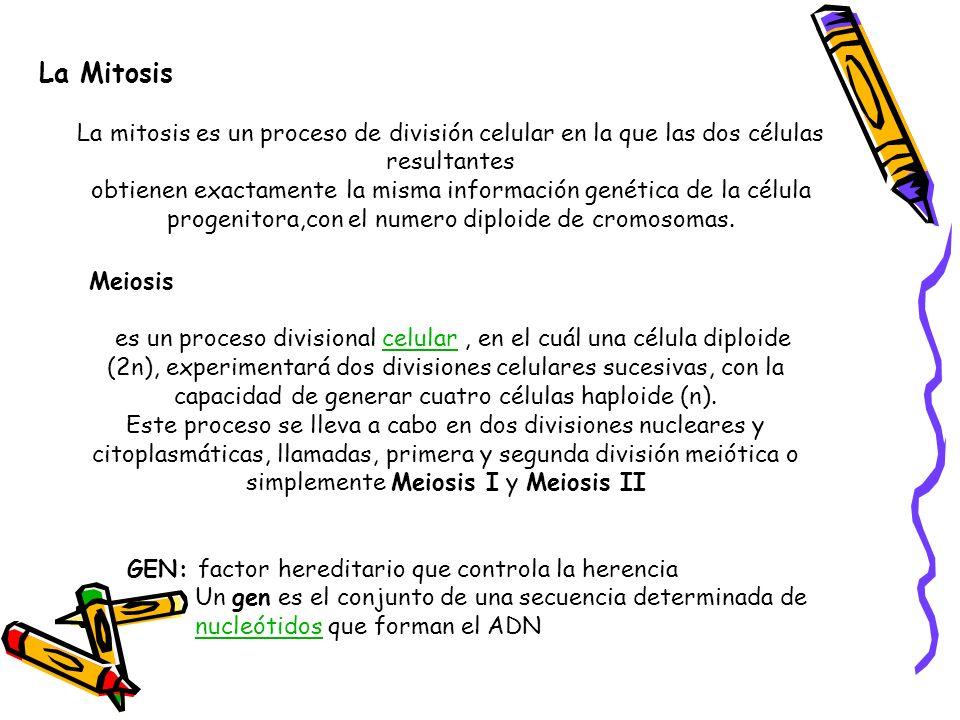 La Mitosis La mitosis es un proceso de división celular en la que las dos células resultantes obtienen exactamente la misma información genética de la