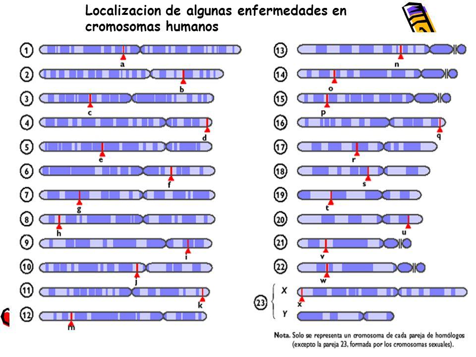 Localizacion de algunas enfermedades en cromosomas humanos