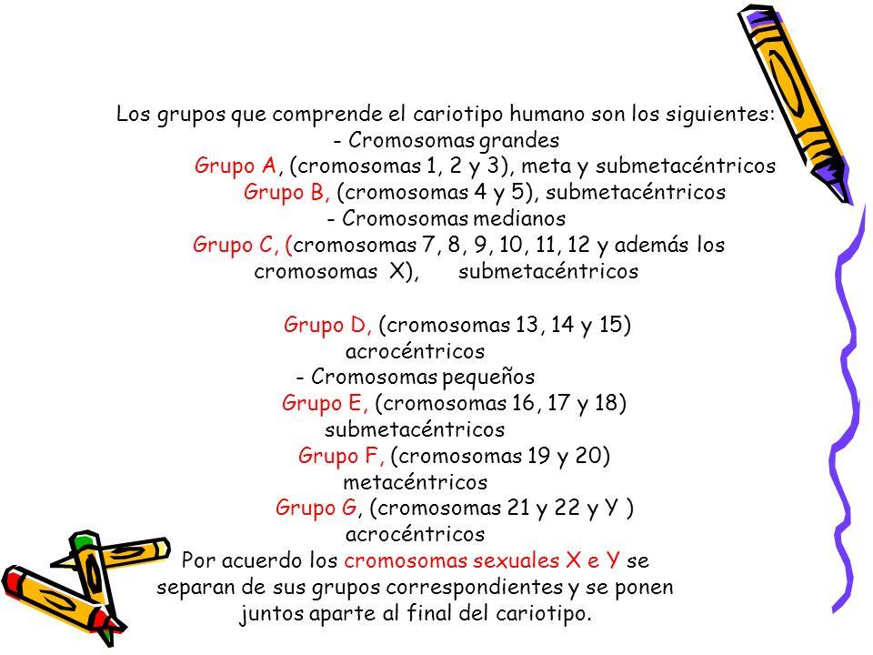 Los grupos que comprende el cariotipo humano son los siguientes: - Cromosomas grandes Grupo A, (cromosomas 1, 2 y 3), meta y submetacéntricos Grupo B,