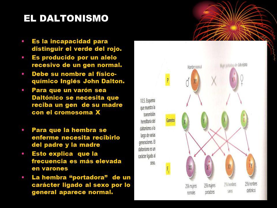 EL DALTONISMO Es la incapacidad para distinguir el verde del rojo. Es producido por un alelo recesivo de un gen normal. Debe su nombre al físico- quím